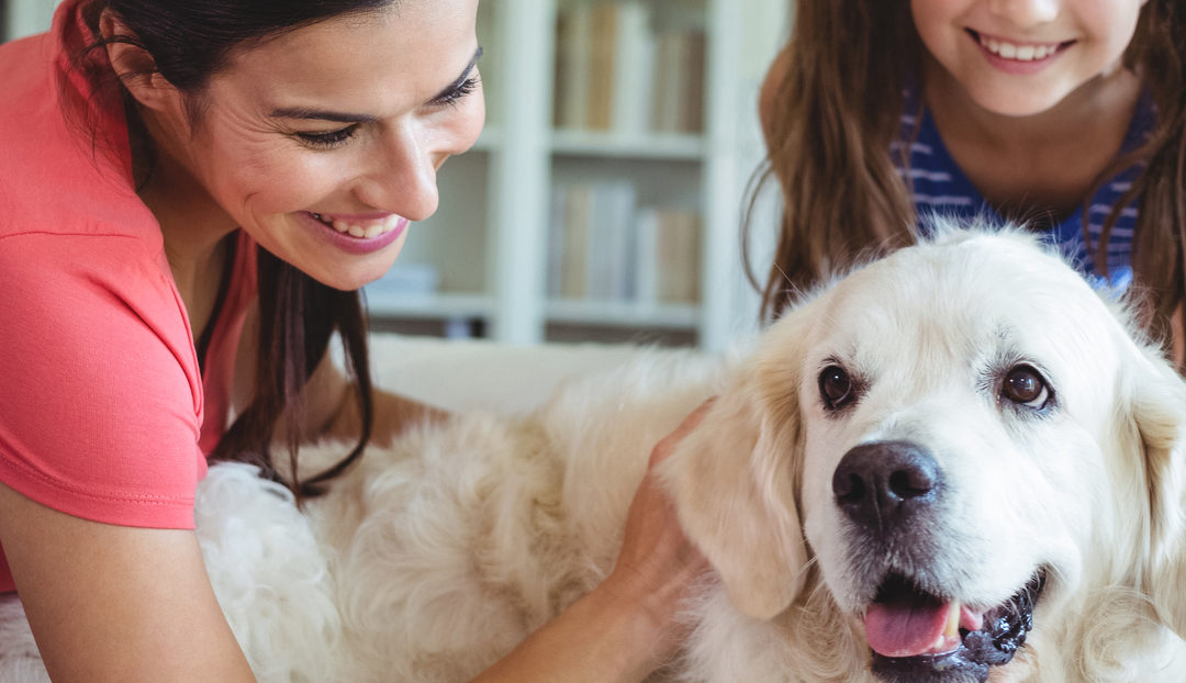 Tips to Pet-Proof Your Home